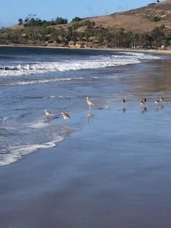 running with birds